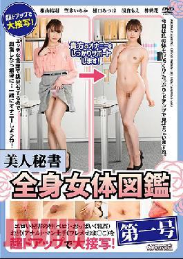 ARMF-017 Beautiful Secretary: Full Body Encyclopedia No.1