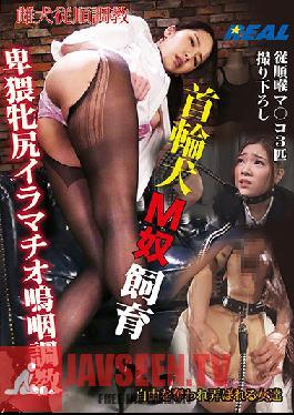 XRL-025 Collar Dog M Guy Breeding Obscene Mare Deep Throat Sobbing Training